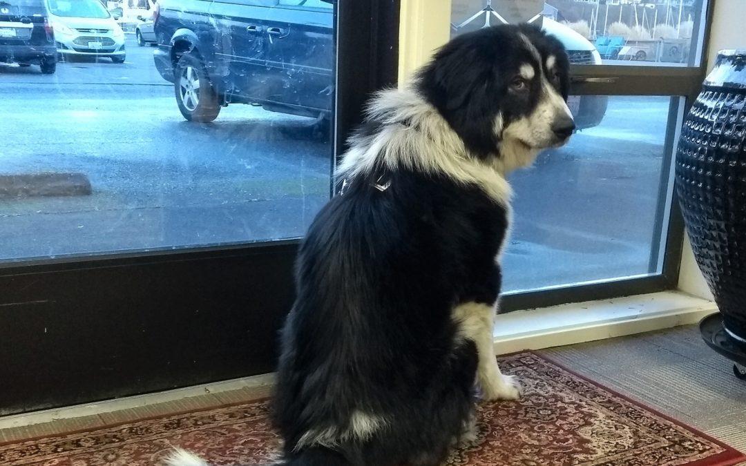 Zuzu, Our New Coworker