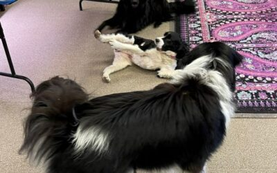 Office Dogs Taking Meetings